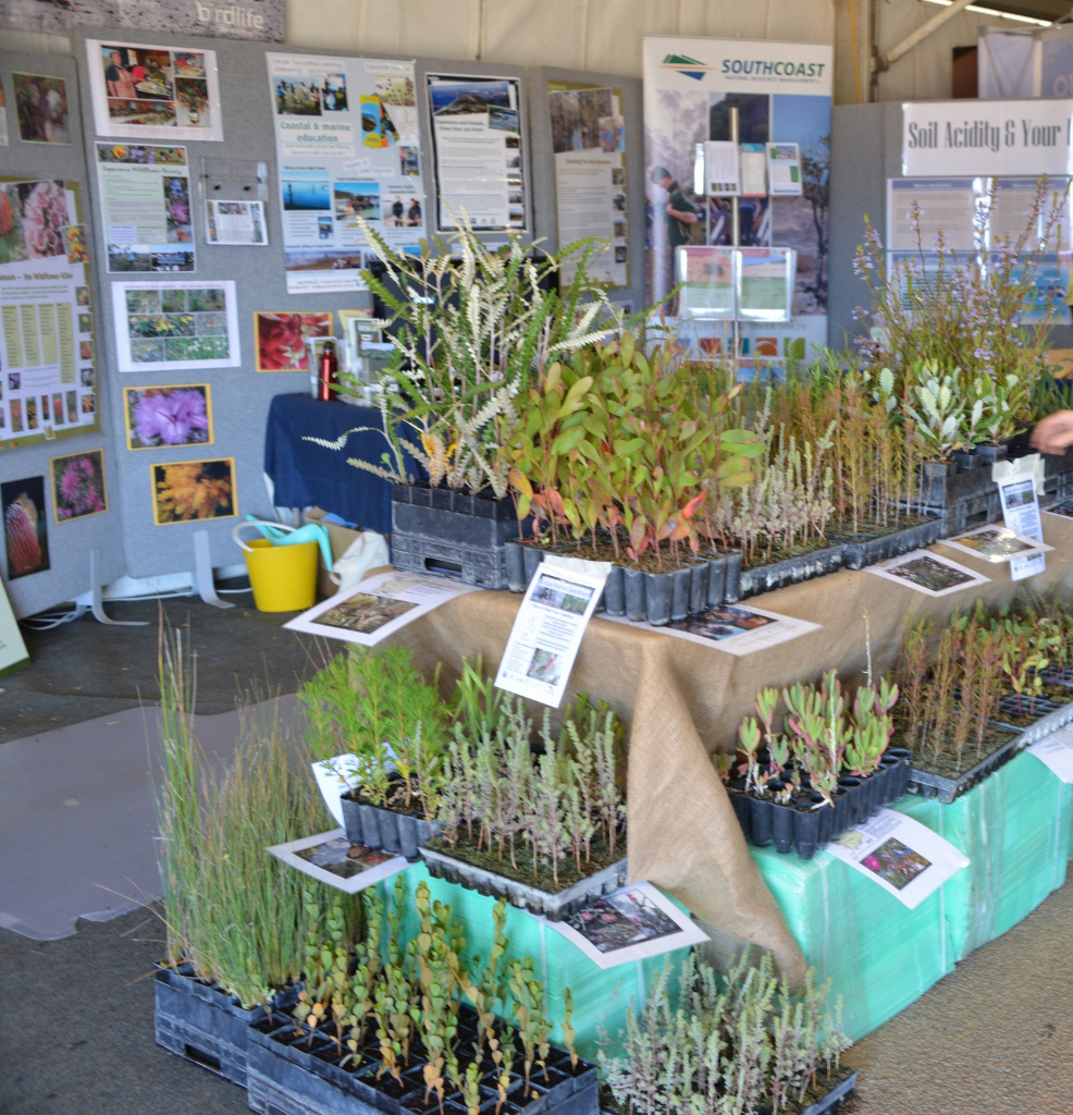 Landcare Seedling and SCNRM display