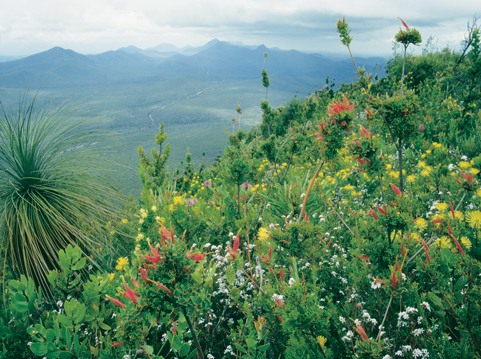 Stirling Ranges 30 years ago